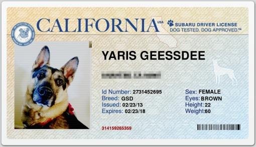 Yaris Driver's License (pixelized)